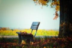 Bitte Platz nehmen! (airamatina) Tags: herbst bank baum sonnig nikon d 750