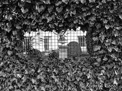 the fence... (andrealinss) Tags: schwarzweiss street streetphotography streetfotografie bw blackandwhite zaun fence clȏture andrealinss detail