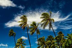 Waikiki.jpg (jamiepacker99) Tags: 2018 summer beach landscape honolulu sky seascape hawaii canon6d september sea palmtrees canonef24105mmf4lisusmlens cloud waikiki