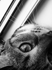 Tigrulya / Тигруля (msergeevna) Tags: prestigio cat animal pet