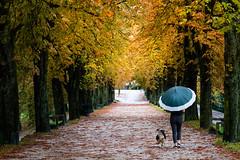 Walk (novak.mato91) Tags: