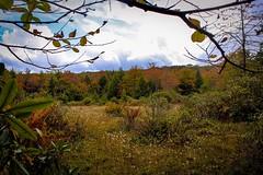 Autumn in the Hidden Bog (sumilex77) Tags: somersetcounty colors foliage autumn commonwealthpa fall bog mtdavis padcnr pennsylvania