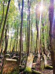 Cementerio judío en Varsovia #Polonia #Varsovia (Larita084) Tags: polonia varsovia