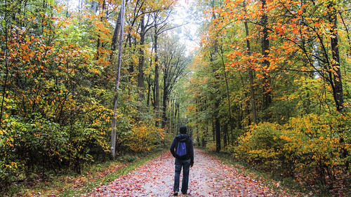 "Fall colors in Ohio • <a style=""font-size:0.8em;"" href=""http://www.flickr.com/photos/125940588@N07/45183192061/"" target=""_blank"">View on Flickr</a>"