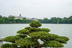 Bonsai Tree with Turle Tower in the Background in Hanoi (wuestenigel) Tags: turletower hoankiemlake buddhism water ngocsontemple turlelake temple lake vietnam bonsai hanoi wasser tree baum travel reise landscape landschaft noperson keineperson nature natur river fluss see summer sommer architecture diearchitektur outdoors drausen sky himmel island insel tourism tourismus scenic szenisch tropical tropisch seashore strand house haus sea meer sight sicht