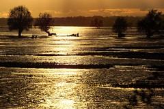 *** (pszcz9) Tags: przyroda nature natura naturaleza nationalpark parknarodowy ujściewarty woda water zachódsłońca sunset drzewo tree gold pejzaż landscape beautifulearth sony a77