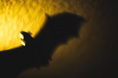 Taking Flight (3rd-Rate Photography) Tags: bat rubberbat halloween decorations toy october canon 50mm 5dmarkiii daytona florida 3rdratephotography earlware 365