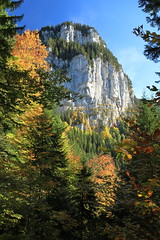 Sous Bellefont (yom1) Tags: rochers rocks rock falaise cliff roche trees arbres automne autumn fall hike hiking rando randonnée promenade nature natural colours colors couleurs sapins calcaire ciel europe france rhonealpes auvargnerhonealpes isère isere chartreuse bellefont malissard montana alpes alps alpi alpen saintpierredechartreuse perquelin canon yom1 eos 6d 6dmkii eos6dmkii eos6dmarkii ef2470 ef2470f4lisusm 2470 polarisant polarizer pola