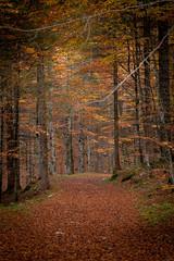 Autumn Road (sandroo) Tags: canon canon70200f4 5dmkii 5dmk2 autumn fall redleaves foglie rosse autunno road strada mountain montagna bosco wood