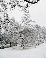 26748589 (aniaerm) Tags: snow ice frost