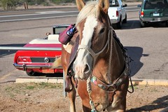 HitchingPost3 (ONE/MILLION) Tags: apache junction arizona local bar pub grill drinks cowboys chicken food music williestark onemillion horse ride outdoors indoors fun hitch hitching post saloon