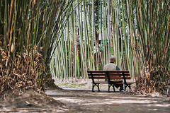 Sitting (johan.bergenstrahle) Tags: 2018 april china finepicsse morgon morning natur shanghai kina spring vår happyplanet asiafavorites