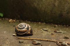 a forsaken shell... (yasin.orhan) Tags: snail shell