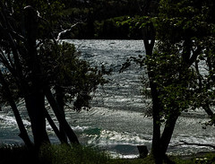 The Lake Has Many Moods... (Ruth Voorhis) Tags: lake waves surf beach shore stones trees foliage leaves branches outdoors parkland