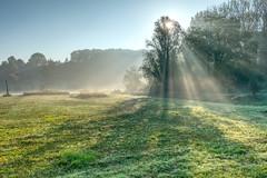 Foggy Morning Sun (enneafive) Tags: sun light rays burst shadows trees meadow bucolic fog mist overbroek gelinden sinttruiden limburg belgium fujifilm xt2 affinityphoto