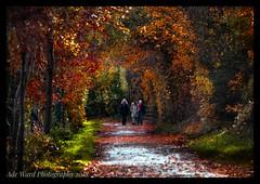 Autumnal wonderland (awardphotography73) Tags: nature red november 2018 photography sigma nikon cardiff wales outdoors leaves seasons colours autumn