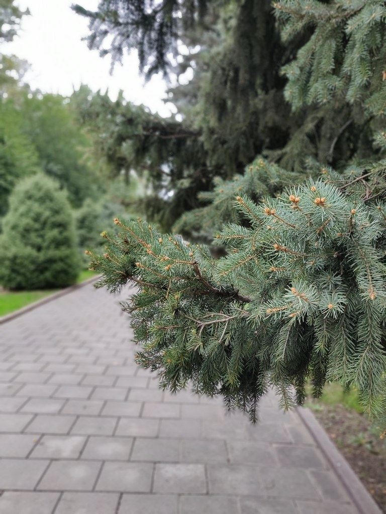 фото: Panfilov Park. Memorial Park in Almaty