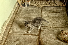 0007 (gill4kleuren - 17 ml views) Tags: pussy puss poes chat mieze katje gato gata gatto cat pet animal kitty kat pussycat poezen