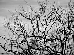 Αχεροντας ποταμος DSC06527 (omirou56) Tags: 43ratio sonydschx60v blackwhite blackandwhite bw monochromo tree greece hellas epirus ελλαδα ασπρομαυρο ασπρομαυρη δεντρο ηπειροσ