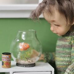Pet Fish (Jay Bird Finnigan) Tags: bjd doll miniature 112 knitting clay polymer goldfish