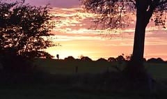 Auf Rindersuche im Morgengrauen; Bergenhusen, Stapelholm (13) (Chironius) Tags: stapelholm bergenhusen schleswigholstein deutschland germany allemagne alemania germania германия niemcy morgendämmerung sonnenaufgang morgengrauen утро morgen morning dawn sunrise matin aube mattina alba ochtend dageraad zonsopgang рассвет восходсолнца amanecer morgens dämmerung himmel sky ciel cielo hemel небо gökyüzü wolken clouds wolke nube nuvole nuage облака tier rind baumsilhouette