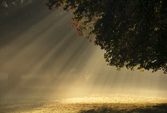 Raining Light (Tracey Whitefoot) Tags: 2018 tracey whitefoot nottingham nottinghamshire wollaton hall deer park autumn fall light shafts rays mist misty tree atmospheric morning sunrise