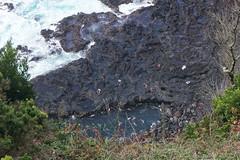 Thermal springs in the Atlantic ocean, no cliff diving! (beyondhue) Tags: ferraria hot thermal geothermal spring vent volcanic beyondhue travel azores san miguel people atlantic ocean warm waves lava rock