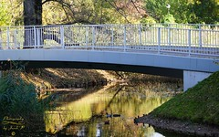 In the park (Jurek.P) Tags: citypark kępapotocka park warsaw warszawa poland polska capitalcity water bridge birds autumn reflections jurekp sonya77