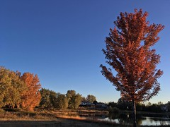 October 22, 2018 - Fall foliage in Thornton. (LE Worley)