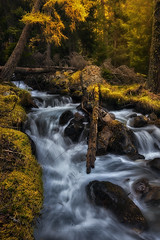 Fallen Tree (Manuel.Martin_72) Tags: graubünden swissalps switzerland autumncolors enchanting fairytale lightdrama magic forest grass moss leaves plants riverbed rocks stones treetrump trees valley woods cascade river water waterfall morning sunrise wbpa ch