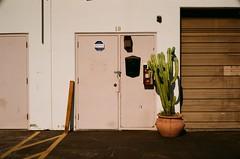 000061070013 (sadjeans) Tags: canonetql17giii hillvaleholiday200 fujifilm digitalcolorimagelab rangefinder 35mm film burbank cactus