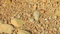 sand bear Arctosa perita capturing spider cf Amaurobius sp (BSCG (Badenoch and Strathspey Conservation Group)) Tags: acm arachnid spider behaviour predation lycosidae arctosa september poorfocus