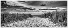 path to the ocean (MAICN) Tags: 2018 sand meer kühlungsborn nature wasser mono sky water sw natur clouds himmel dünengras bw beach ostsee monochrome strand dünen schwarzweis dune balticsea seascape einfarbig ocean wolken blackwhite