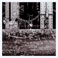 _love_locks (fot_oKraM) Tags: koeln bruecke bridge rhein rhine cologne love lovelocks padlocks train railway nrw liebe liebesschloss liebesschloesser hohenzollernbruecke