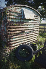 September ends (Dave S Campbell) Tags: september spotted rover p5 wagon railway van box rust flower