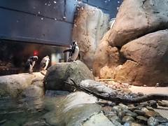 2018-09-30 11.09.31 (littlereview) Tags: carolinas littlereview 2018 travel museum animal aquarium blog penguin