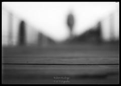 Distance (Mister Blur) Tags: ps james shallow depthoffield dof low pointofview pov bokeh desenfoque profundidaddecampo blur blurred background monday monochrome blackandwhite bw blancoynegro noireetblanc montréal quebec canada dock promenade walk silhouette nikon d7100 35mm snapseed rubén rodrigo fotografía