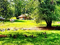 #ADayAtThePark and #Lake Making friends with the #Ducks My Fine #FeatheredFriends  Admiring all the Gorgeous Green #Trees  Enjoying #Nature At It's Best!  #GreensboroCountryPark #GreensboroNCScienceCenter #GreensboroNorthCarolina #GreensboroNC  #NorthCaro (thru_my_eyes_youll_see_photos) Tags: trees nature beauty melibscapturesoflife throughmyeyes throughmyeyesyoullsee lake featheredfriends ducks greensborocountrypark greensboroncsciencecenter greensboronorthcarolina northcarolina travel throughmyeyesphotography life doyouseewhatisee throughmylens adayatthepark missmelibsphotos greensboronc