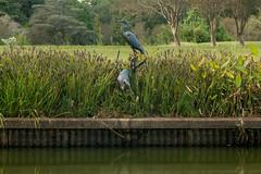 Blue Heron statue 2 NBG (Puddin Tain) Tags: norfolkbotanicalgarden norfolkvirginia statue animal bird great blue heron