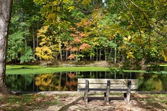 Autumn Reflection (anneescott) Tags: 52in2018challenge fall autumncolors