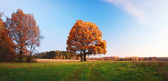 Autumn season (czdistagon.com) Tags: autumn season landscape field yellow wheat meadow morning tree oak scenery sunrise nature outdoor sky countryside background beautiful rural sunset colorful grass view scene silhouette country mist alone scenic beauty plant one wood fresh natural dawn forest wallpaper sunlight fantastic panoramic russia