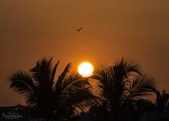 Sunrise (26.09.2018) (dr_malar) Tags: sunrise sunrises nature beautiful silhouette nikon nikond750 bird tree sun