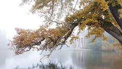 IMG_3327 (Calabrones) Tags: deutschland oberbayern bayern schlossparknymphenburg münchen herbst morgen nebel morgennebel bäume herbstlaub wasser see mignonbergeroswald