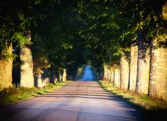 Alley (Helena Johansson 71) Tags: alley nature trees outdoors road roadtonowhere nikond5500 d5500 nikon