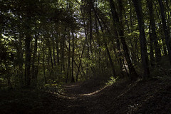 deep calm (Marco - MB Photography) Tags: deepcalm forest walkinginnature relaxing breathing oxygen leica