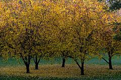 Autumnal tableau (Poupetta) Tags: helsinki autumn fall trees tölöviken
