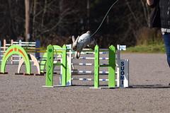 DSC_0073 (klawerjanina) Tags: bunnyjump bunny kani kaniestekisat kanin kaninhoppning
