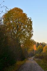 Yellow is the new trend colour (Villikko) Tags: syksy autumn fall ruska colors colours värikäs värit keltainen yellow trees puut forest woods metsä finland road tie countryside maaseutu