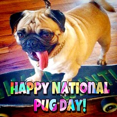 """Happy National Pug Day... my Peeps! 🐥🎉 -PugsleyLuigi   #pug #dog #peeps #happy #fun #celebration #pugsrule #pugs #zen #dogs #skate #skateboard (TheZenOfPugsleyLuigi) Tags: pug dog peeps happy fun celebration pugsrule pugs zen dogs skate skateboard"