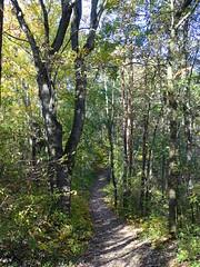 Waldweg (Thomas230660) Tags: sonne herbst flora sony arnstadt wanderung landschaft landscape bäume thüringen trees blätter